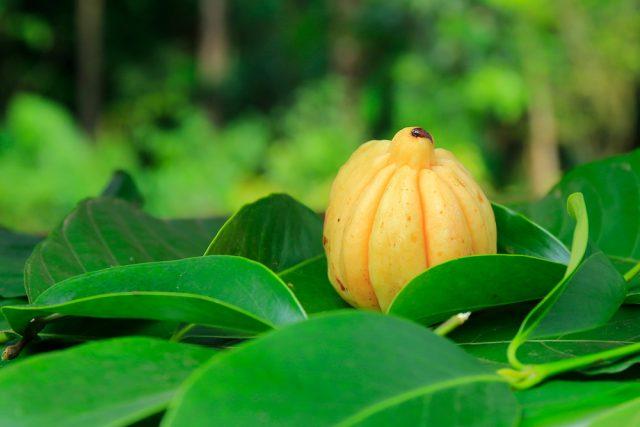 Tamarinier de Malabar
